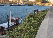 vista do douro 20